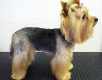 Dog Grooming Examples Pet Universe