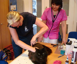 Picture of Mayhew Animal Home Students Practicint