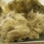 Waste Fur