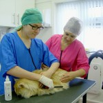 Christopher - student of our Cat Grooming School