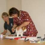 Cat Grooming Demonstration 2007