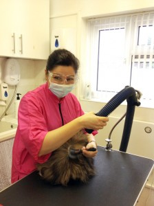 Rita on the Basic Cat Grooming Course at Pet Universe