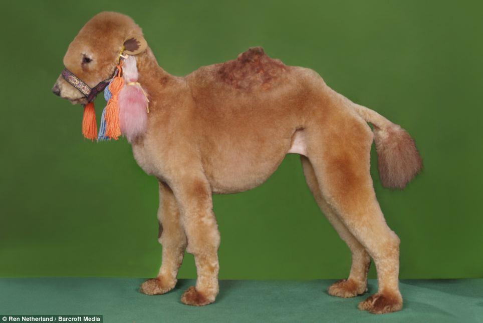Beloved Dog Grooming