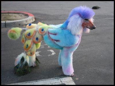 To dye, or not to dye? | Pet Universe